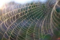 Araignée de Trancoso