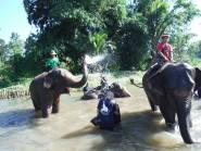 elephants025