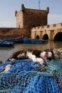 Essaouira et ses chats paresseux